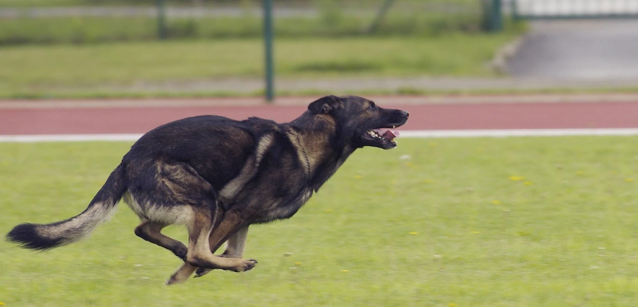 chien-75