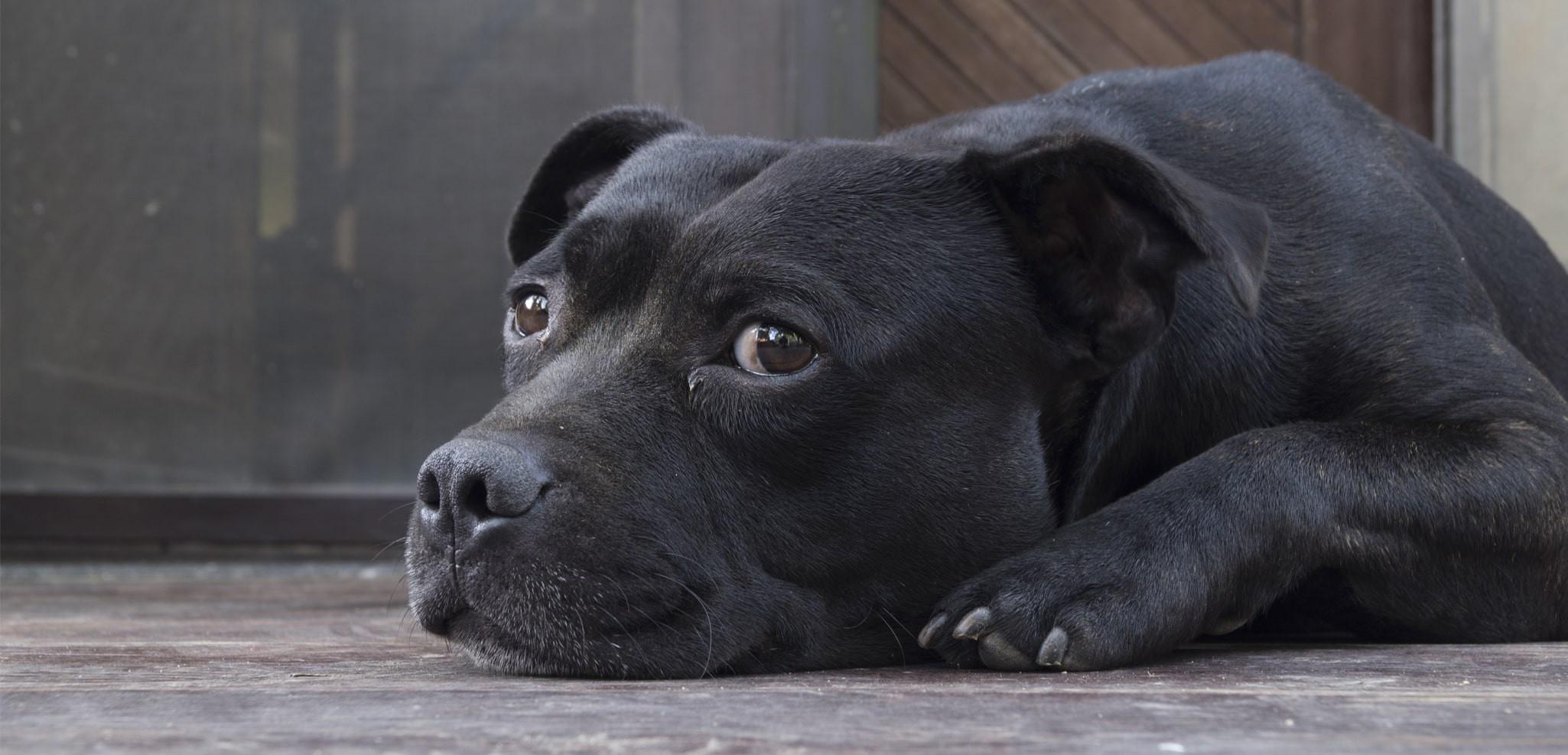 chien-36